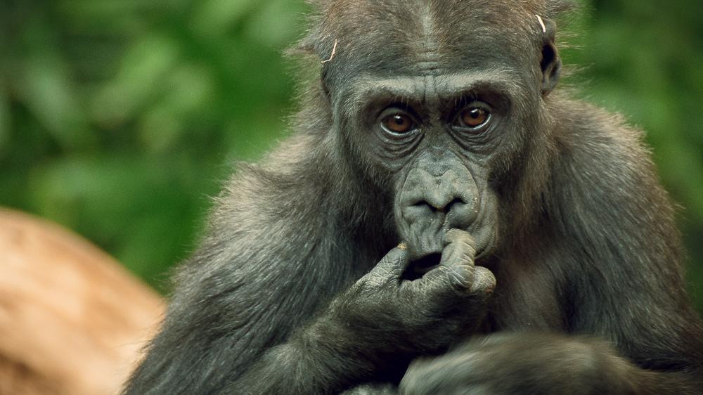 動物の「子ども」の呼び方、知ってますか?